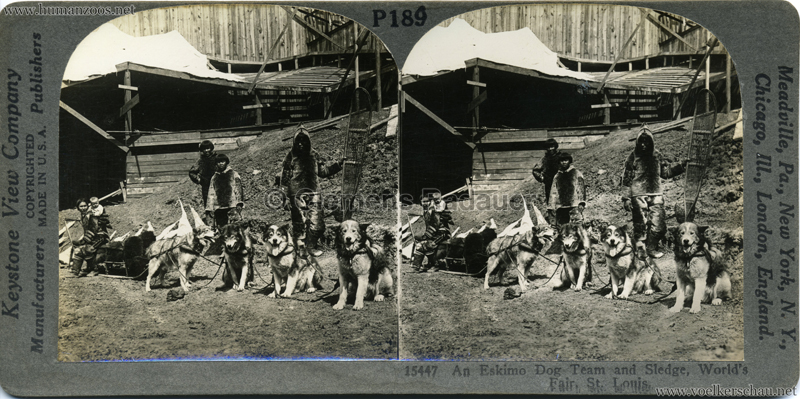 1904 World's Fair, St. Louis - 15477 An Eskimo Dog Team and Sledge