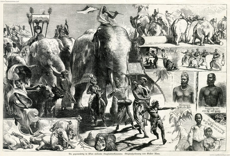 1884.07.12 Illustrirte Zeitung S. 32 - Die gegenwärtig in WIen weilende Singhalesenkarawane