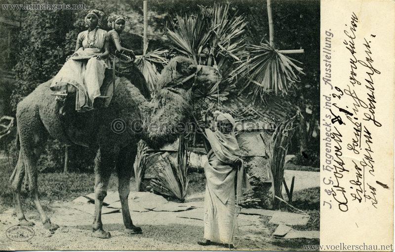 1904 J. & G. Hagenbeck's ind. Ausstellung 3