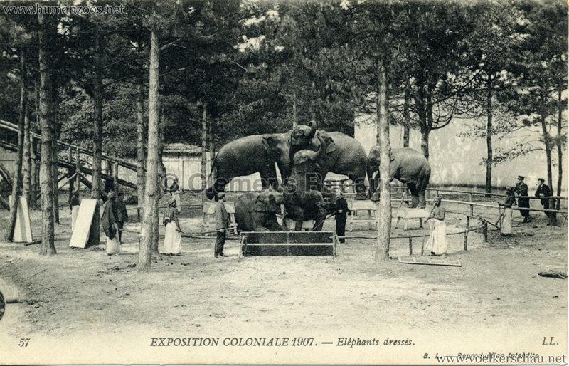 1907 Exposition Coloniale Paris, Bois de Vincennes - 57. Eléphants dressés
