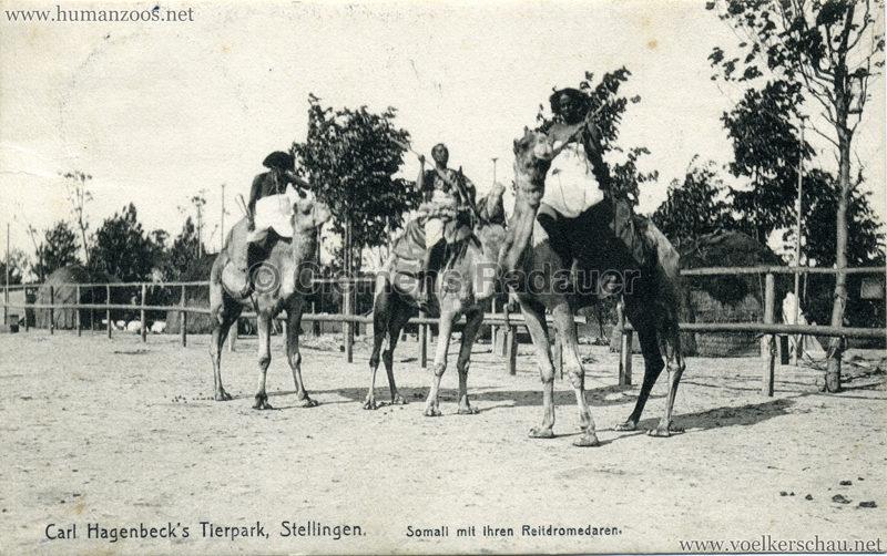 1907 Hagenbeck Somali 39. Somali mit ihren Reitdromedar