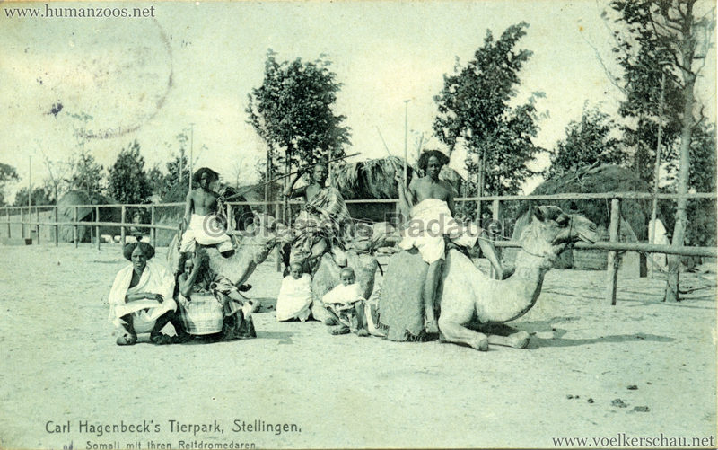 1907 Hagenbeck Somali 43. Somali mit ihren Reitdromedaren