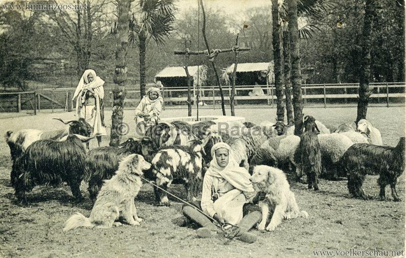 1912 Marquardt's Beduinen-Karawane 1. Schaf und Ziegenherde am Brunnen