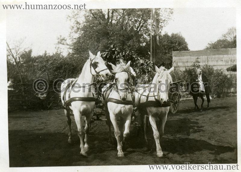 1932 Djigit Kuban Kosaken bei Hagenbeck - Foto 50