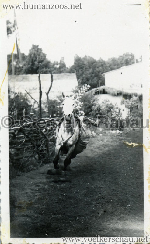 1932 Djigit Kuban Kosaken bei Hagenbeck - Foto 6