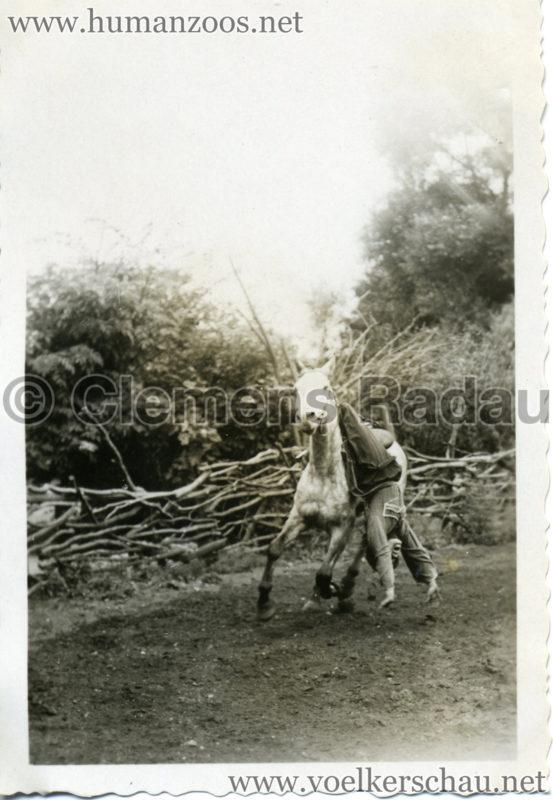 1932 Djigit Kuban Kosaken bei Hagenbeck - Foto 70