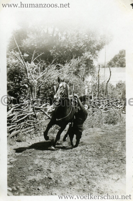 1932 Djigit Kuban Kosaken bei Hagenbeck - Foto 8
