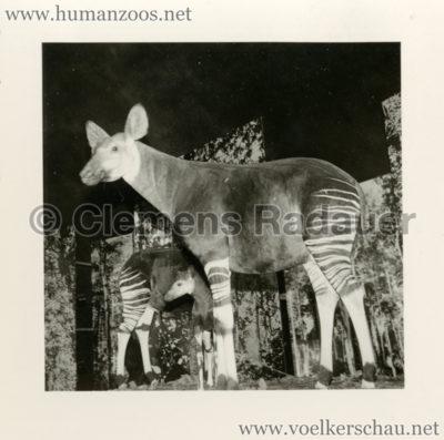 1958-exposition-universelle-bruxelles-fotos-s4-2