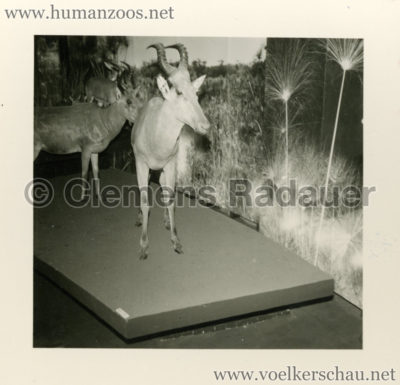 1958-exposition-universelle-bruxelles-fotos-s4-3