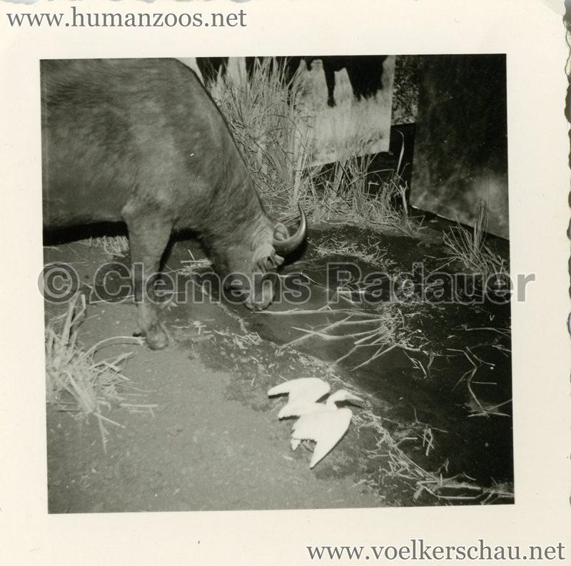 1958-exposition-universelle-bruxelles-fotos-s4-4