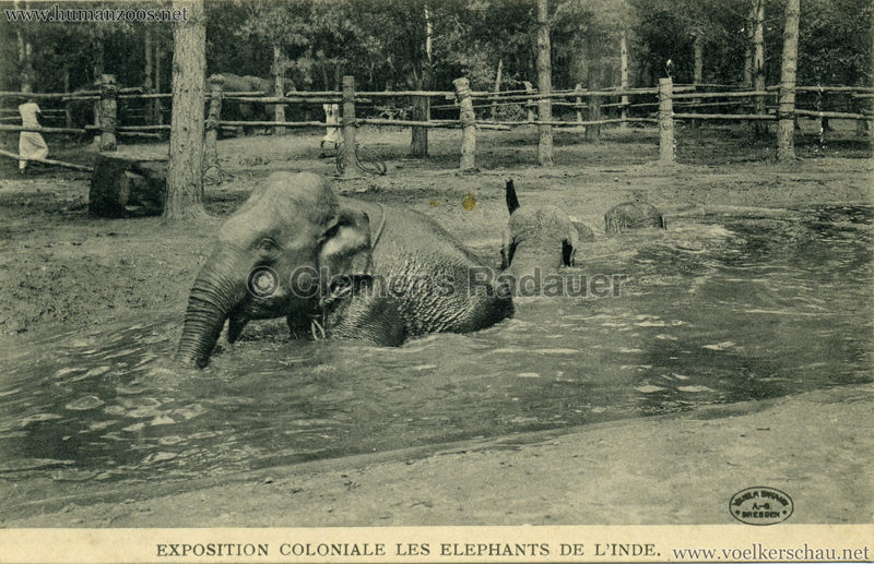 Exposition Coloniale - Les Elephants de l'Inde 5