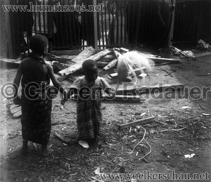 Jardin d'Acclimatation Glassdias 1903 Achantis (?) 8