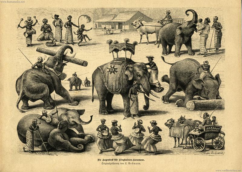 1884 - Die Gartenlaube Nr. 34 - Die Hagenbeck'sche Singhalesen-Karawane - Seite 1