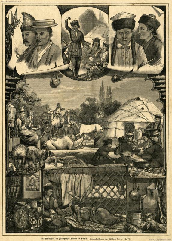 1884-illustrirte-welt-die-kalmu%cc%88cken-im-zoologischen-garten-in-berlin