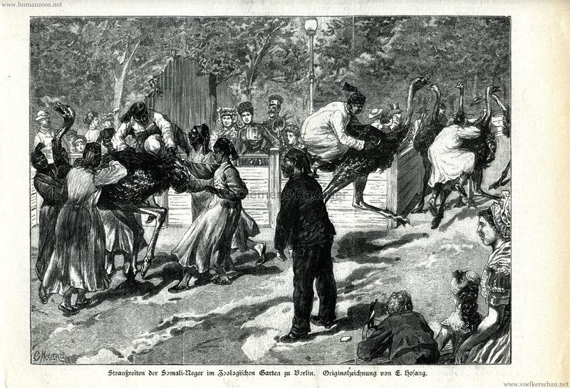 1885.08.29 Illustrirte Zeitung Nr. 2200 - Straußenreiten der Somali-Neger im Zoo Berlin 1