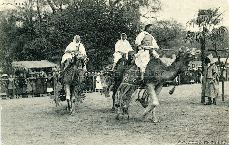 1912 Marquardt's Beduinen-Karawane 11. Reitdromedare