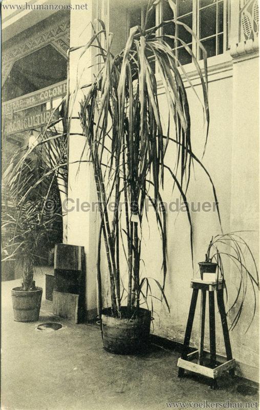 1913 Exposition de Gand - Congo belge. Propagande agricole coloniale 2