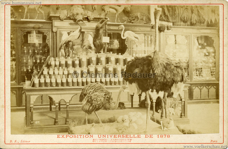 1878 Exposition Universelle Section Algerienne CDV 1