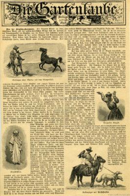 1898 Gartenlaube Heft 20 - Von der Kirgisen-Karawane