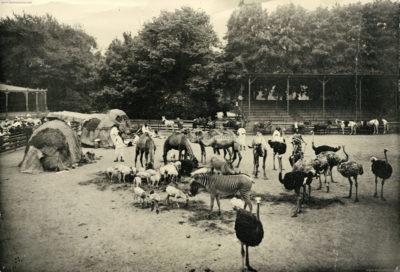 1908 Carl Hagenbeck's Galla-Truppe FOTO 1