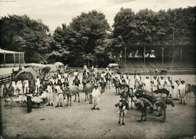 1908 Carl Hagenbeck's Galla-Truppe FOTO 4