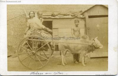 1886 Carl Hagenbeck Ceylonese:Cynghalais:Singhalesen - Attelage avec Zebus CDV VS