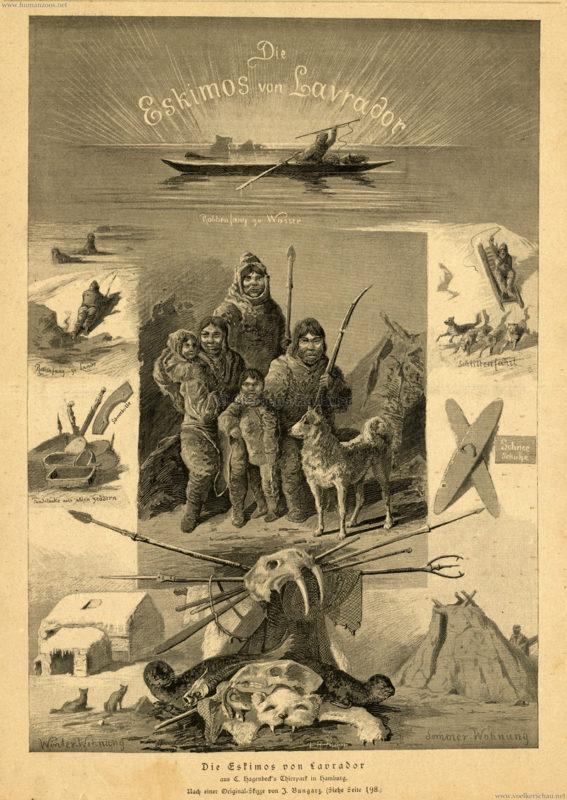 1881 Neue Illustrirte Zeitung - 1. Band - Die Eskimos von Lavrador aus C. Hagenbeck's Thierpark in Hamburg