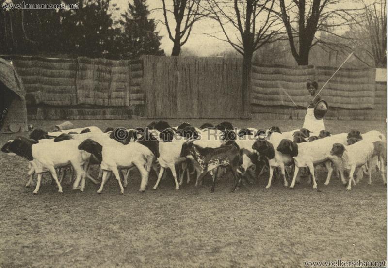 1926 L. Ruhe - John Hagenbeck's Somali-Dorf aus Abessinien - Hirtenjunge