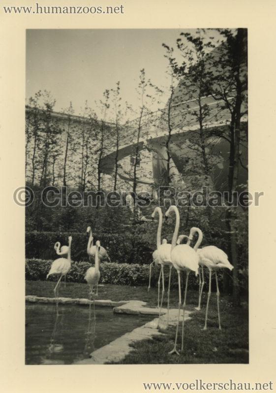 1958 Exposition Universelle Bruxelles - FOTOS S11 2