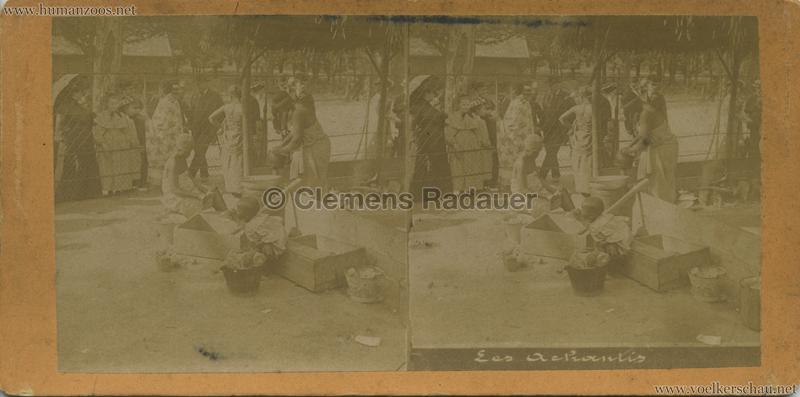 1903 Les Achantis Jardin d'Acclimatation STEREO 1